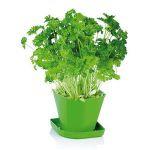 Набор для выращивания пряных растений SENSE, петрушка